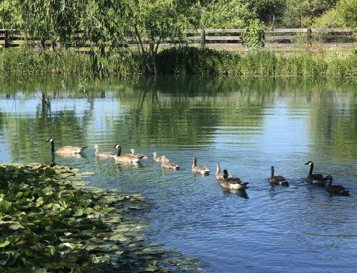 Getting Ducks in a Row